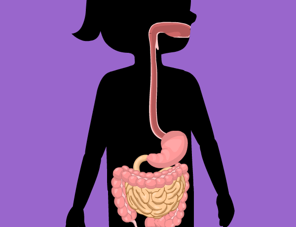 Image for Digestive System