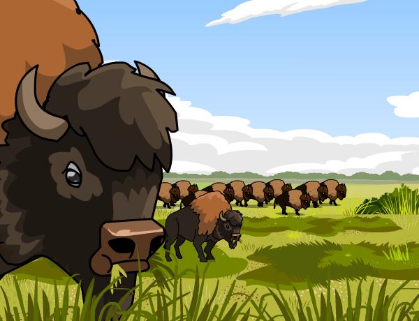 Image for Grasslands